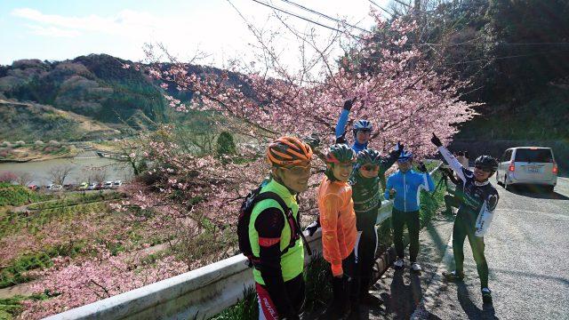 SRC2月の走行会は見頃を迎えた佐久間ダムの河津桜見物